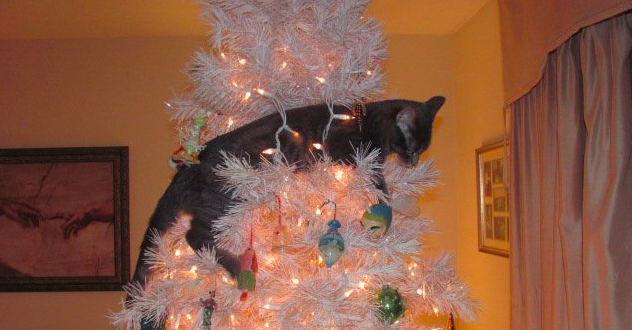 Image result for Cats Destroy Christmas Tree