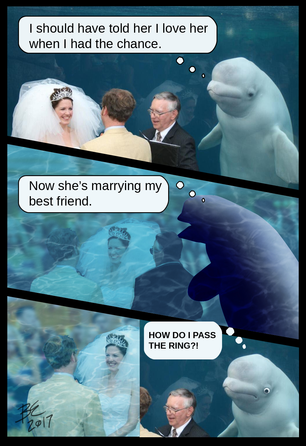 Beluga Whale Photobombs Wedding, Becomes The Internet's ...