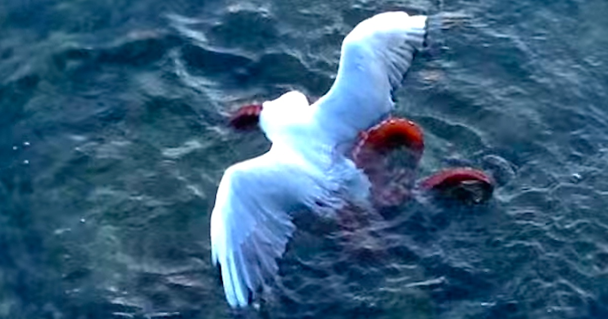 octopus drags seagull down right in front of kids who were