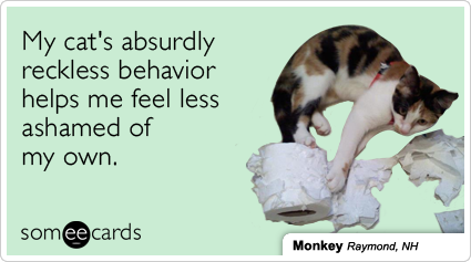 someecards.com - My cat's absurdly reckless behavior helps me feel less ashamed of my own.