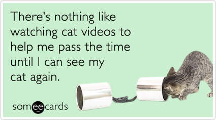 someecards.com - There's nothing like watching cat videos to help me pass the time until I can see my cat again.