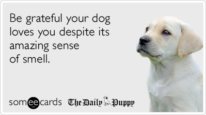someecards.com - Be grateful your dog loves you despite its amazing sense of smell.