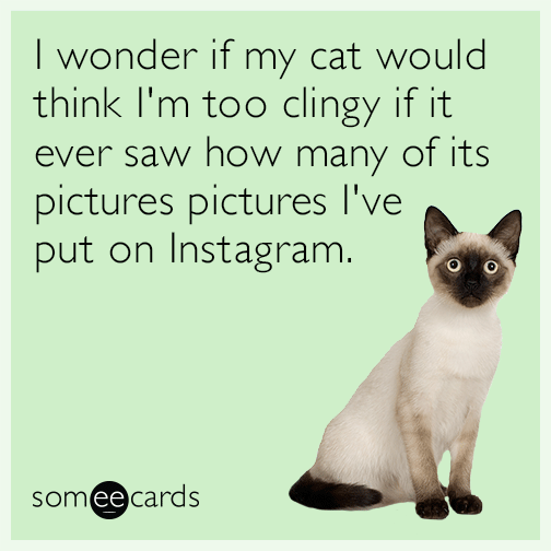 I wonder if my cat would think I'm too clingy if it ever saw how many of its pictures are on my Facebook page.