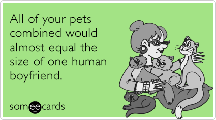 Cats | Someecards