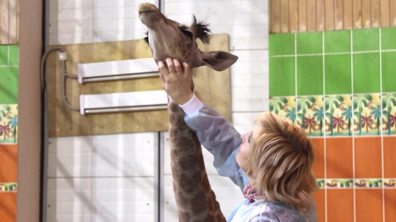 What the f**k is happening in this video of a woman scratching a giraffe's neck?
