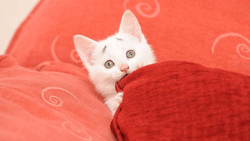 This kitten was born with permanently worried eyebrows and a lucrative Internet future.