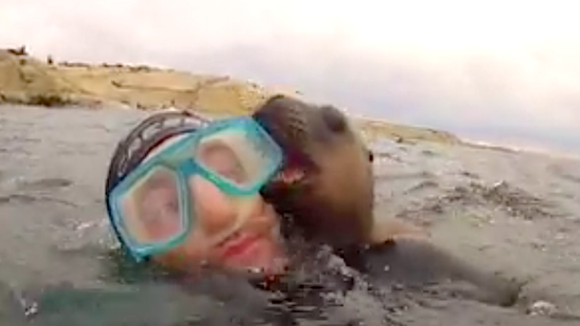This baby sea lion keeps trying to kiss this guy on the mouth.