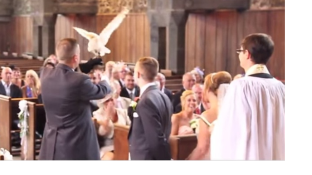 This bride had a great reaction to being upstaged by an owl on her wedding day.