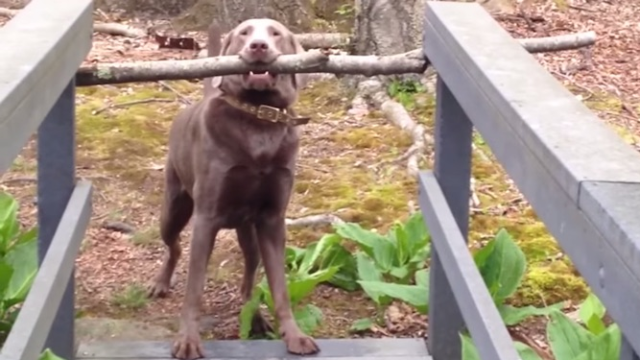 First you'll think this dog is dumb, but then you won't.