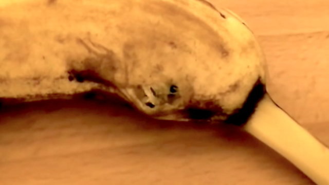 What's really happening in this terrifying viral video of a spider bursting out of a banana?