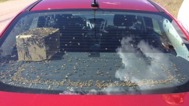 I dunno, I think this guy is driving around with too many bees in his car.