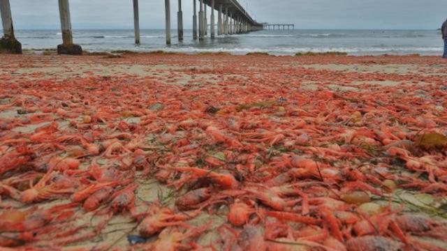 Uh oh, California's got crabs.