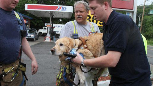 A service dog jumped in front of a bus to protect his blind owner. Ow, my heart!