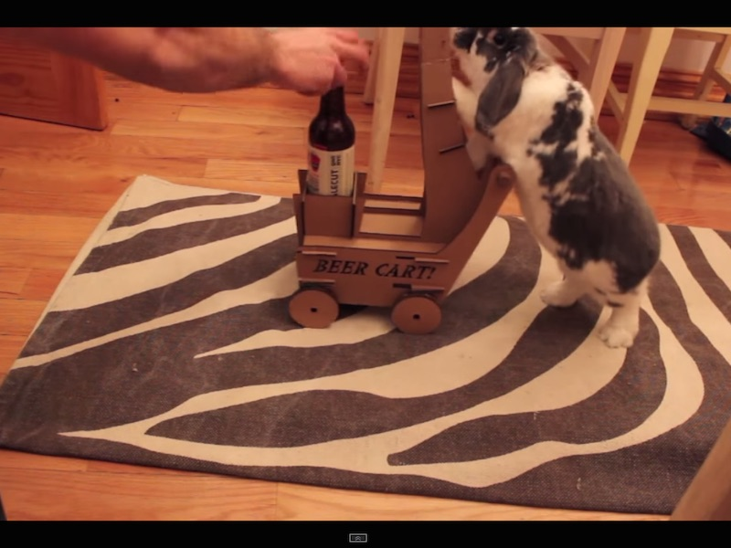 """This rabbit has learned to deliver beer to people and it's apparently """"art."""""""