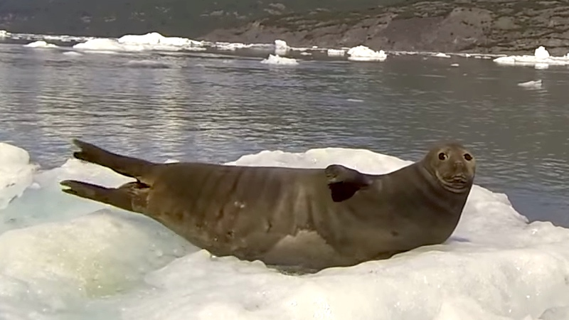 You only have to say one word to a snoozing seal to scare the crap out of it.