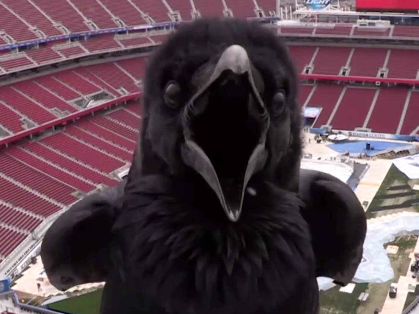 This raven videobombed a stadium webcam to terrify sports fans.