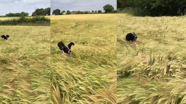 Someone will really need to check this dog for ticks, but it's worth it to get this video.