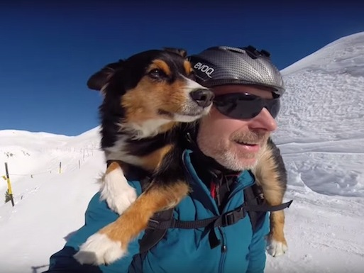 This skiing dog will make you wish winter wasn't over.