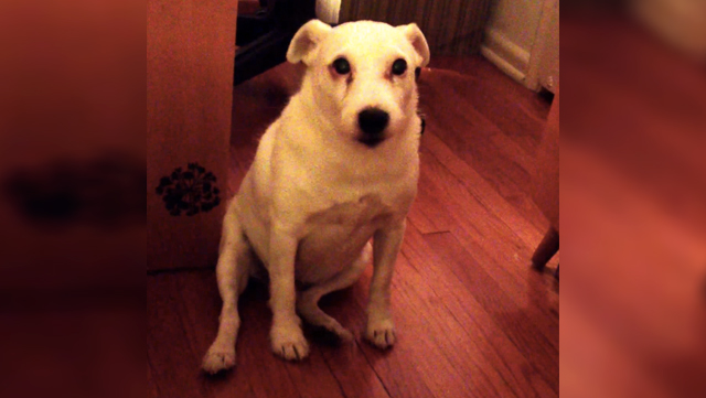A guilty dog has the cutest reaction after getting caught being bad.