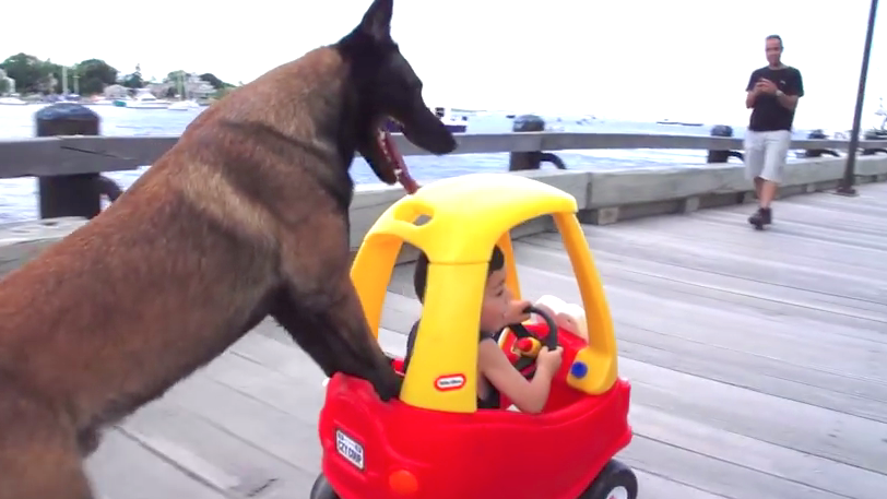 13 ways to use your dog as something besides a dog.