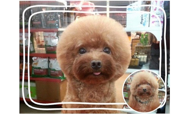 Shaving dogs into cubes is the latest grooming trend and the photos are amazing.