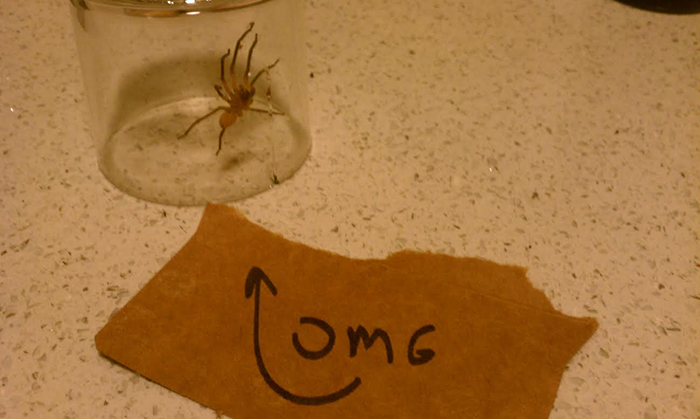 11 hilarious overreactions to bugs found in the house.