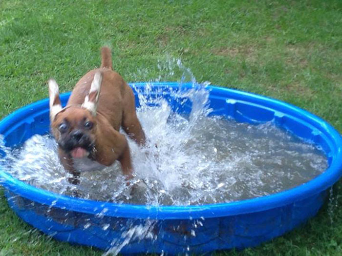 Photos that prove dogs will do just about anything to beat the summer heat.