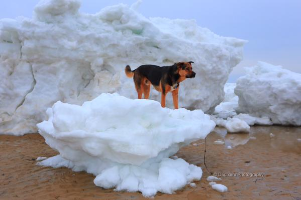 Massachusetts may be done with snow, but now 8 foot-tall icebergs are washing up on beaches.