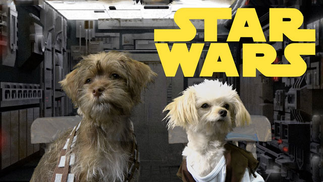 A bunch of puppies just remade the original 'Star Wars' trilogy for your viewing pleasure.