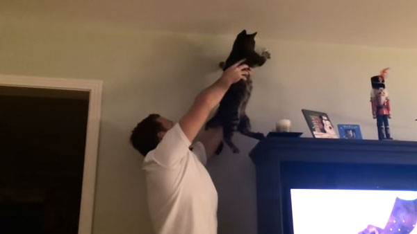 A cat and his human team up to catch an insect intruder.