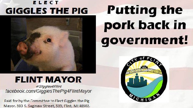 A pig is running for mayor, and his opponent is a murderer who threatened to eat him.