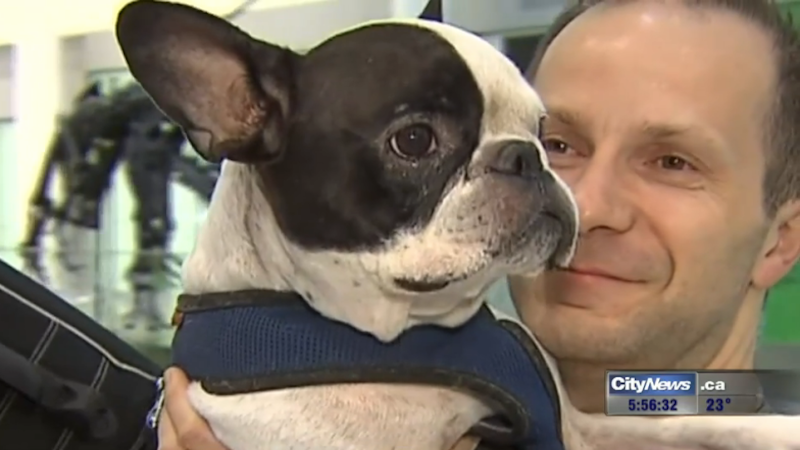 Air Canada pilot makes emergency landing to save dog from freezing.