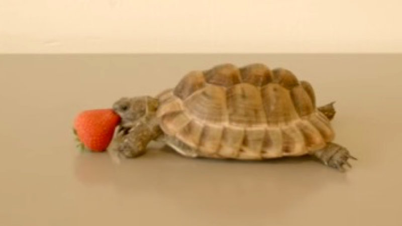 One of Alan Rickman's final roles was voiceover for a tortoise eating a strawberry.