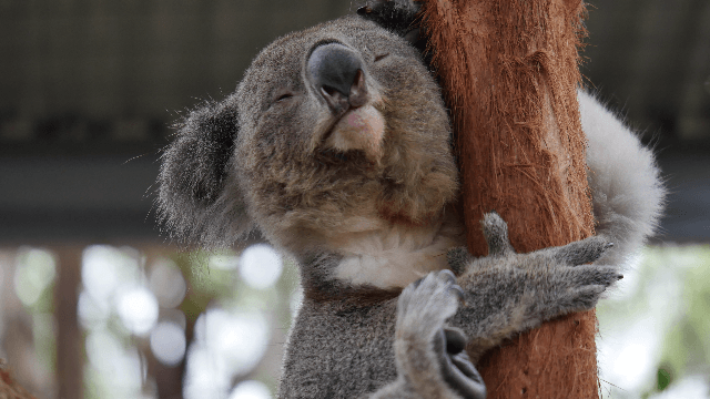 14 animals that are clearly having an existential crisis.