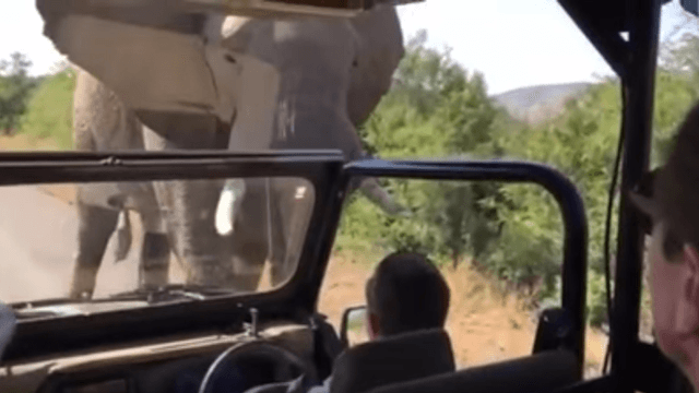 Arnold Schwarzenegger gets chased by an elephant, hints he might have peed himself.