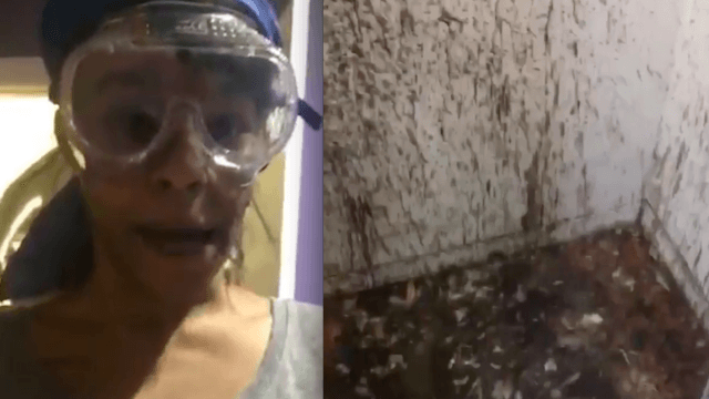 Azealia Banks posts video of herself cleaning the closet where she's sacrificed chickens for years.