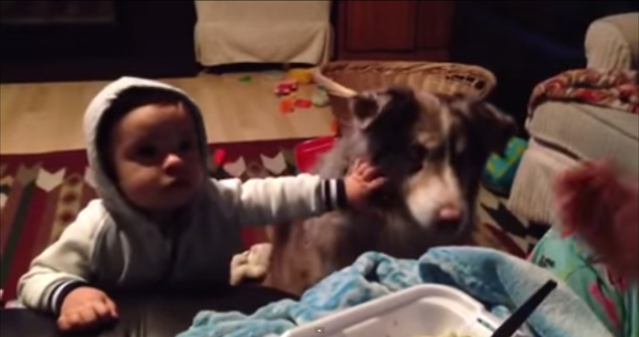 "Baby is so mad his dog is better at saying ""mama."""