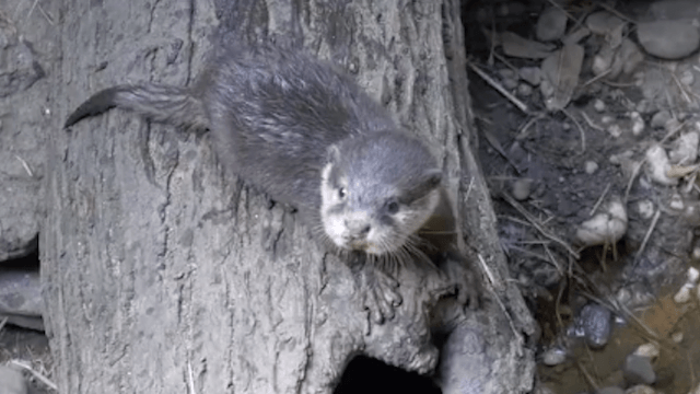 Quit your job and leave your family, there's a cute-as-hell new otter pup at the Bronx Zoo.