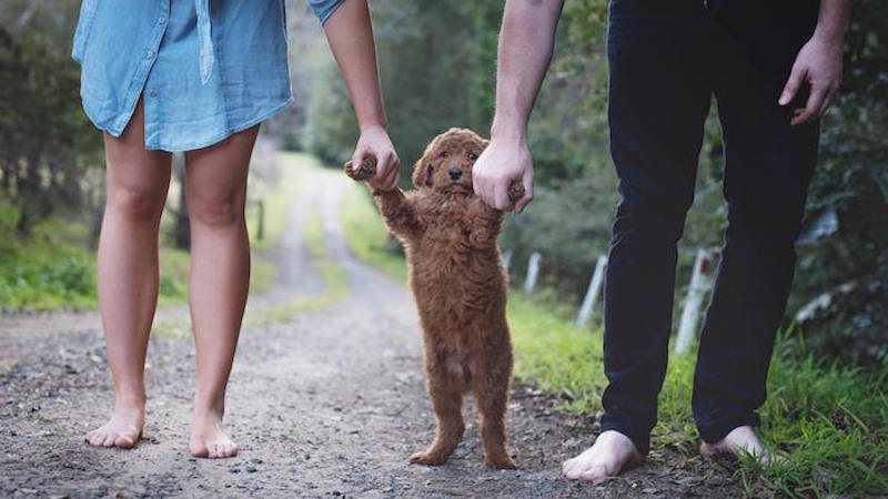 Couple does newborn baby shoot with their dog to get their parents to shut up about grandkids.