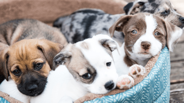 This bachelor party turned puppy party is all of your dreams rolled into one story.