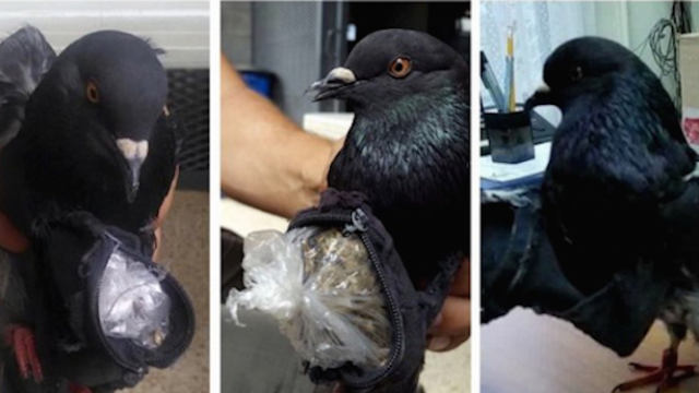 12 of the weirdest and most amusing ways people have been caught smuggling contraband.
