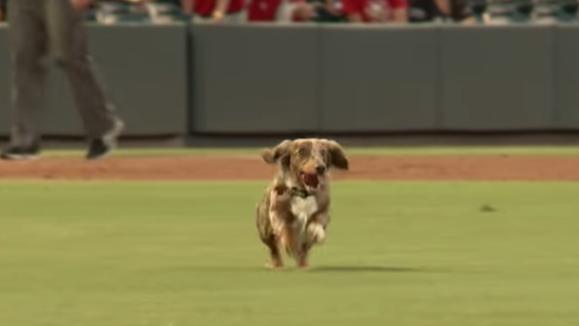 No one can catch this wiener streaking across the baseball field.