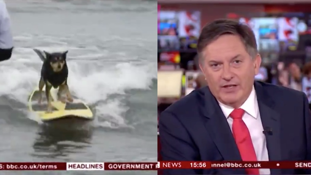 BBC anchor can't hide how much he hates having to report on the World Dog Surfing Championship.