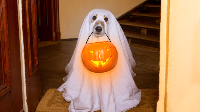 37 dogs who won Halloween this year. Sorry, humans!