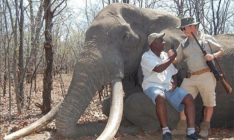 People are upset the biggest elephant in Africa was killed because some guy thought that would be fun.