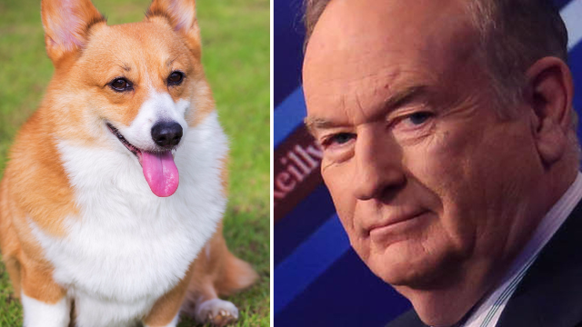 Bill O'Reilly thinks dogs don't have knees and he's using that to attack liberals on Instagram.