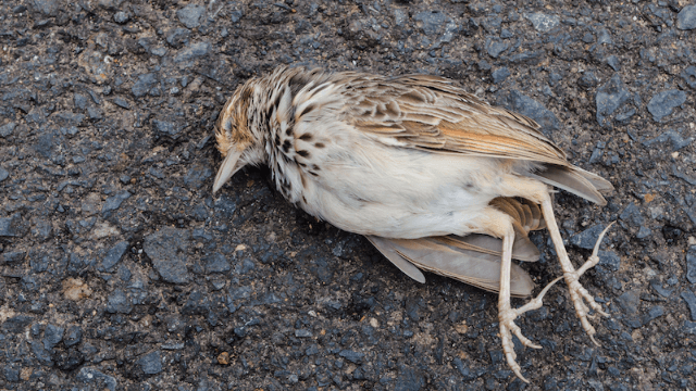 Dead birds are inexplicably falling from the sky in New Jersey, which can't mean anything good.