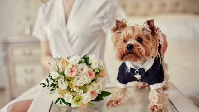 Bride asks if she's wrong to say sister can't bring 'fake' service dog to her wedding.