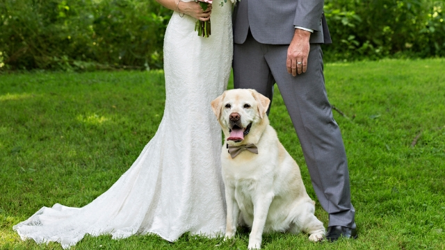 Man asks for advice after fiancé stops speaking to him because he used wedding funds for dog's surgery.