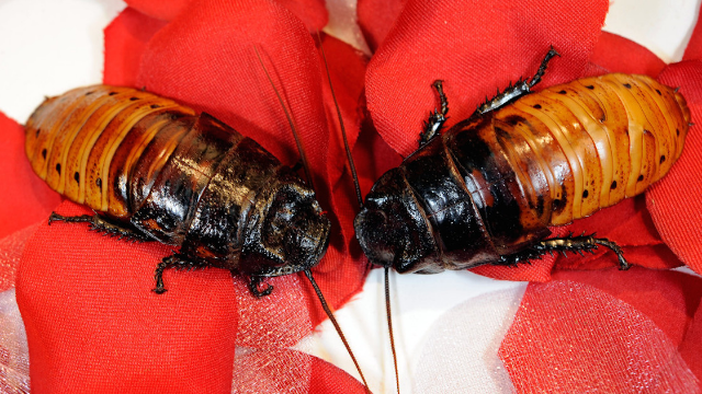 The Bronx Zoo's roach-themed Valentine's Day promotion will 'bug' you more than couples in love.